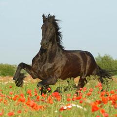 Pferdefotografie Manfred Grebler