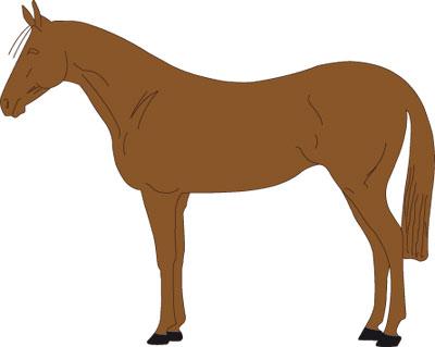 vollschur - Pferd Scheren Muster