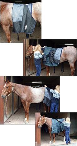 Decke dein Pferd gut und sicher ein